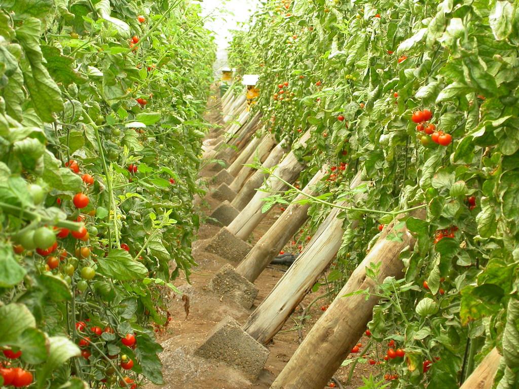 Un comité hará más internacional al mercado agroalimentario